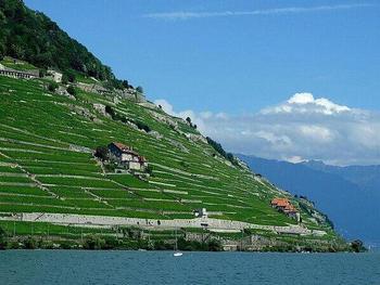 【スイス】ラヴォー地区の葡萄畑。I4Tsc.jpg
