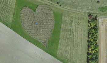 【ハート型地形26】イギリスのウィルトシャー州にあるハート型の木々1].jpg