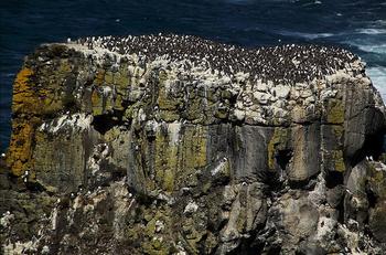 【ハート型地形51】ラスリン島、アイルランド[1].jpg