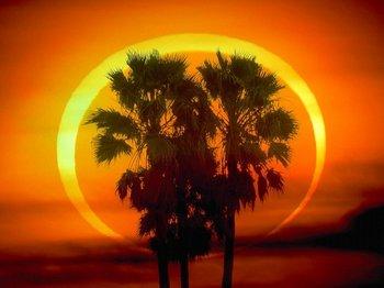 と椰子の木4.jpg