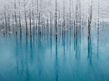 冬の美瑛湖 1.jpg