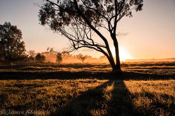 夕陽の中の樹.jpg