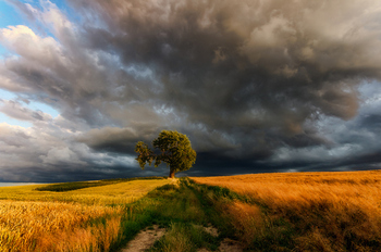 暗雲と一本の木.jpg