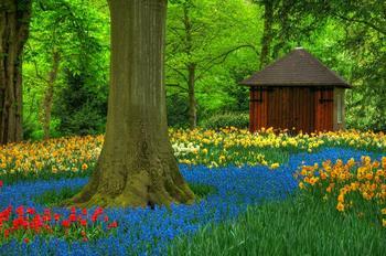 色鮮やかな森2.jpg